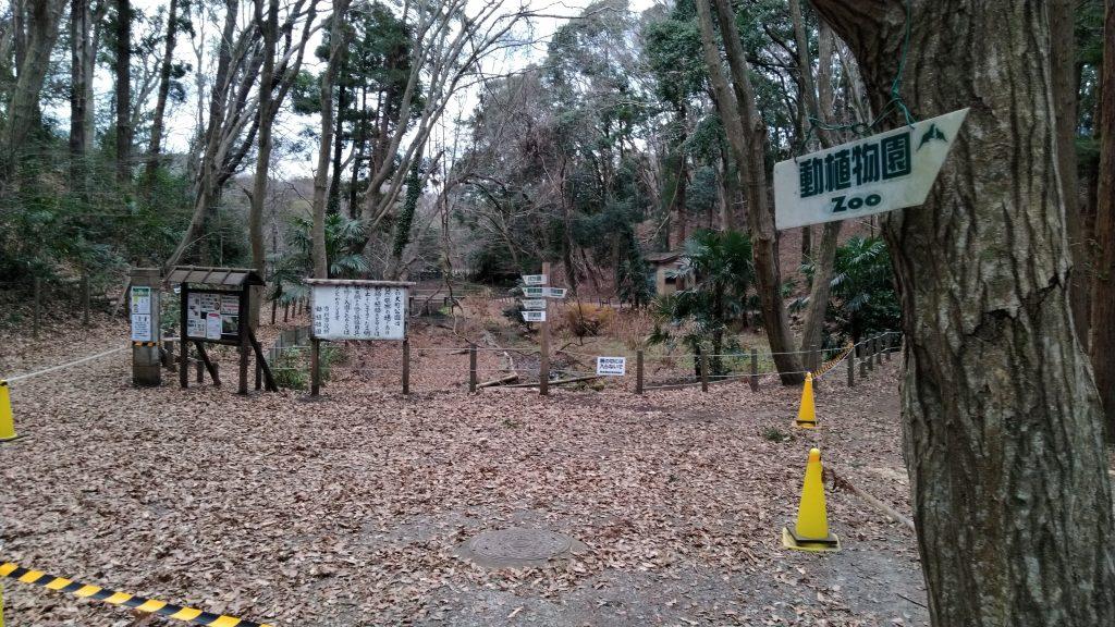 観葉植物園までの道1