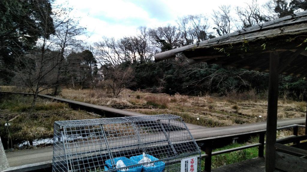 観葉植物園の道3